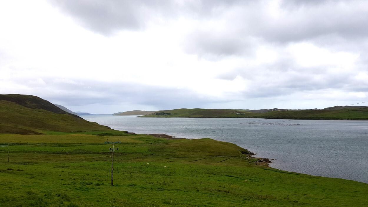 Shetland Tondra