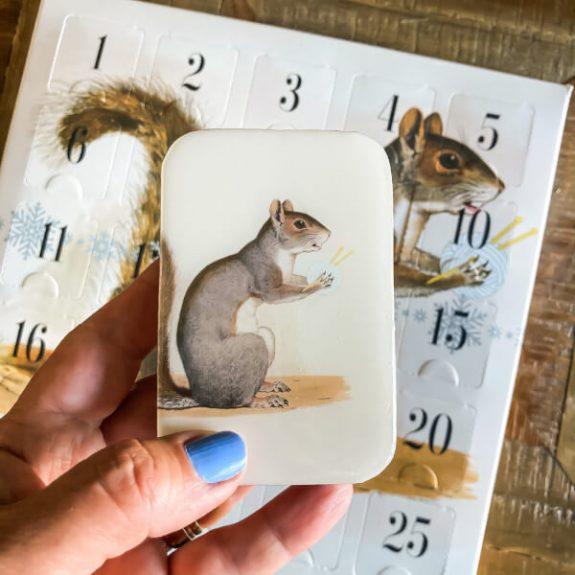 Firefly Notes - Squirrel